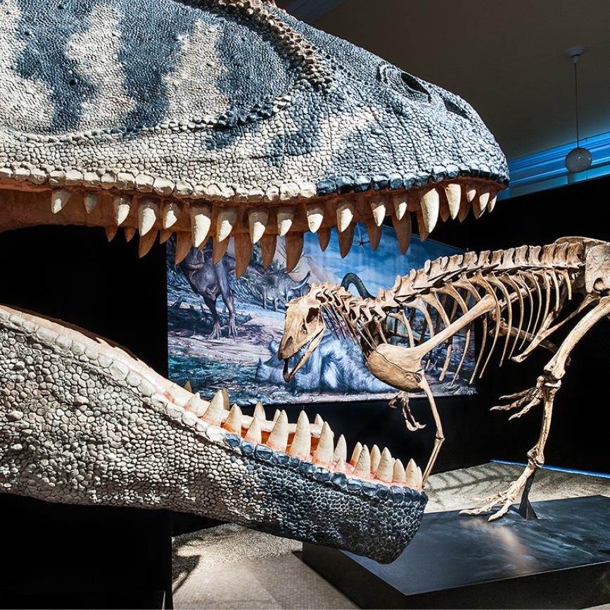 Spinosaurus Exhibition
